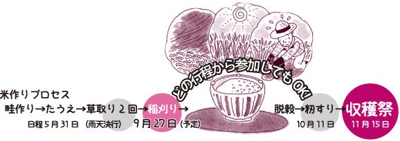 米作りプロセス