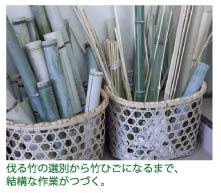 伐ってきた竹